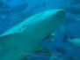 Fiji Under Water