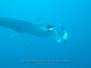 Palau Under Water