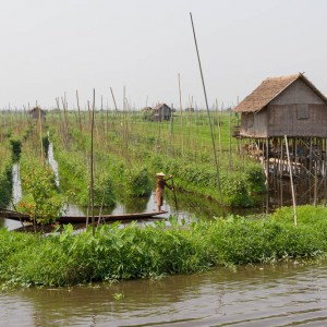 Inle Lake floating gardens, Myanmar