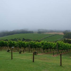 Montalto winery on Mornington Peninsula